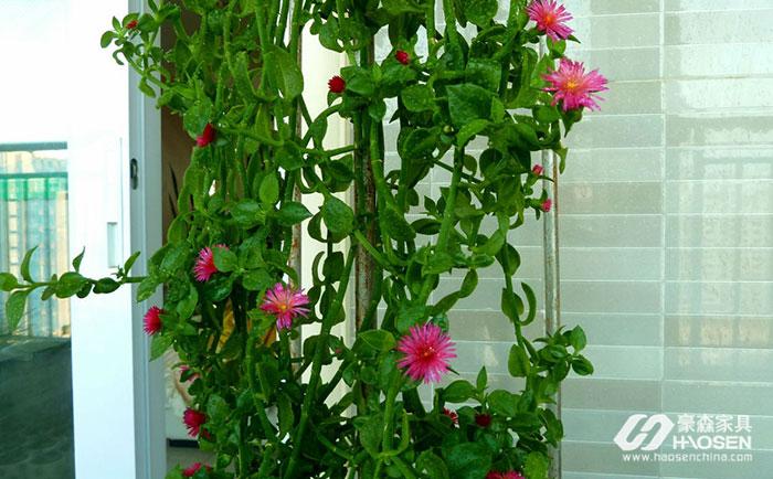 阳台能摆放哪些植物?阳台摆放植物的讲究
